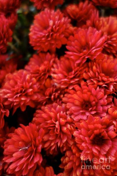 Photograph - Fall Red by Jacqueline Athmann