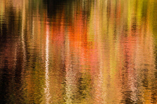 Photograph - Fall Reflection 5 by Karen Saunders