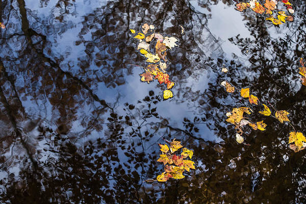 Photograph - Fall Reflection 8 by Karen Saunders