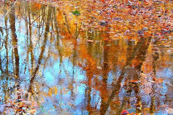 Photograph - Fall Reflection by Candice Trimble