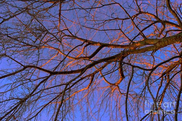 Photograph - Fall Reflections By Diana Sainz by Diana Raquel Sainz
