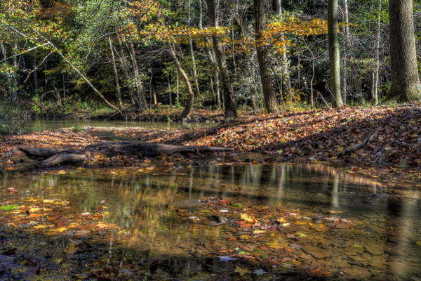 Photograph - Fall Scene In The Woods by David Dufresne