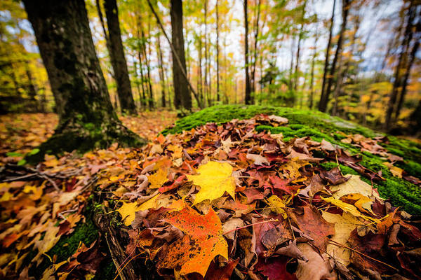 Quebec Photograph - Fall Scenes At North Hatley In Quebec by John Wang