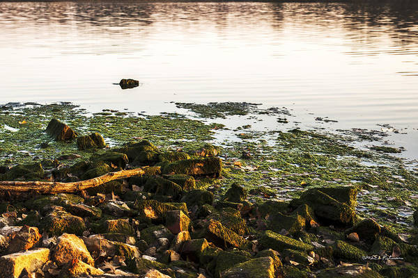 Photograph - Fall Shoreline by Edward Peterson