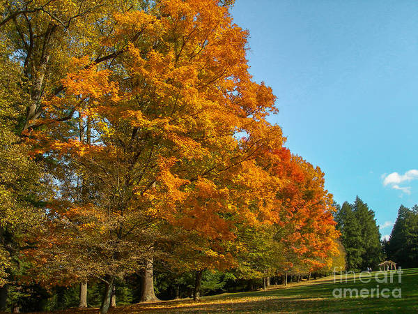 Photograph - Fall Spendor by Dale Powell
