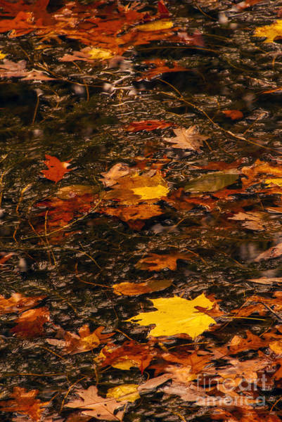 Photograph - Fall Stream Bed by Paul W Faust -  Impressions of Light