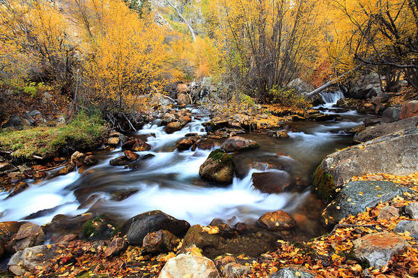 Fall Stream Art Print by Darryl Wilkinson