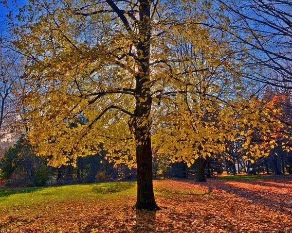 Photograph - Fall Tree by Dragan Kudjerski