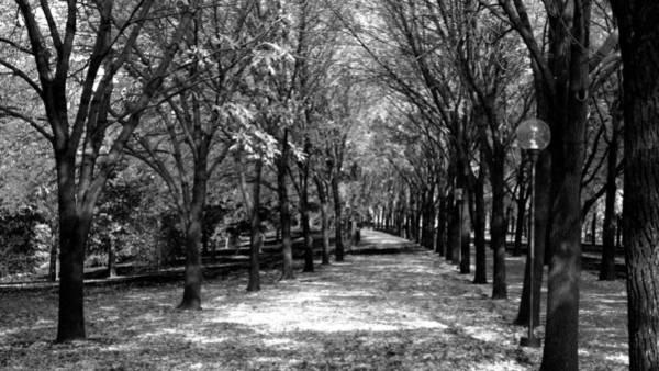 Fall Tree Promenade Landscape Art Print