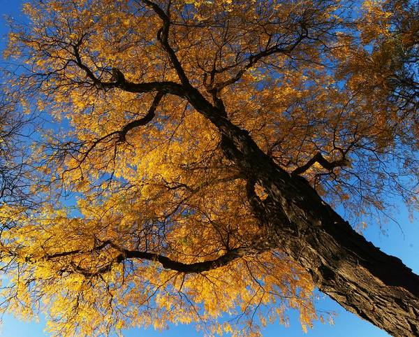 Photograph - Fall Trees 1 by Dimitry Papkov