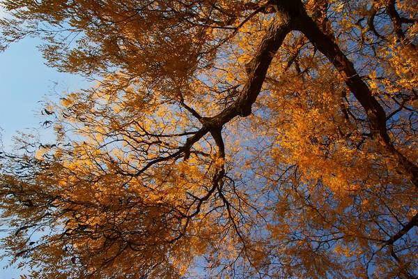 Photograph - Fall Trees 2 by Dimitry Papkov
