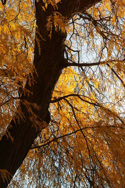 Photograph - Fall Trees 4 by Dimitry Papkov