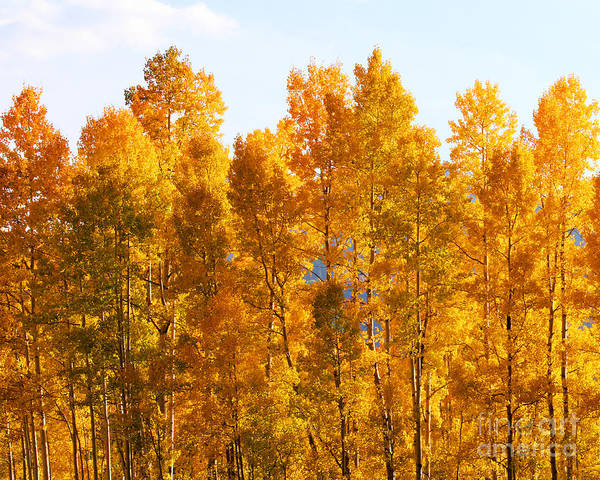 Art Print featuring the photograph Fall Trees 8x10 Crop by Kate Avery