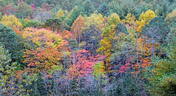 Photograph - Fall Trees Across The Valley by Duane McCullough