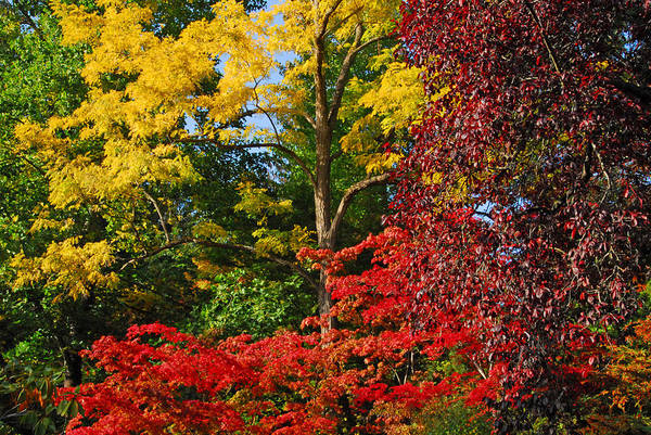 Photograph - Fall Trees At Bouchart by Lynn Bauer