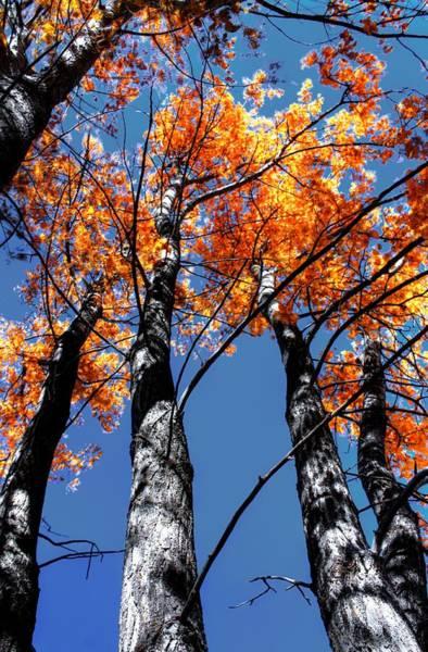 Photograph - Fall Trees by David Matthews