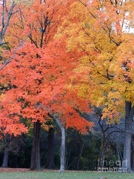 Photograph - Fall Trees Late Evening - M Landscapes Fall Collection No. Lf44 by Monica C Stovall