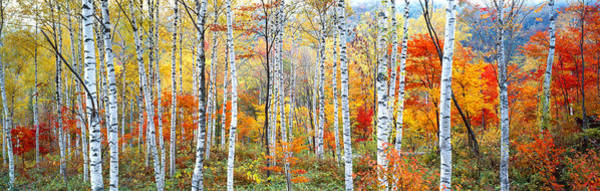 Image Wall Art - Photograph - Fall Trees, Shinhodaka, Gifu, Japan by Panoramic Images