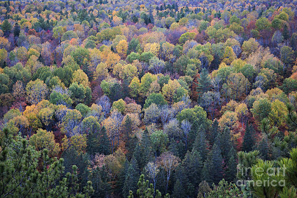 Tree Top Photograph - Fall Treetops by Elena Elisseeva
