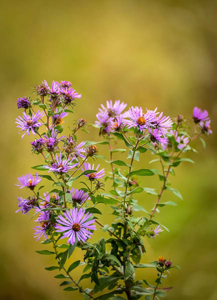 Photograph - Fall Wildflowers by Robert Mitchell