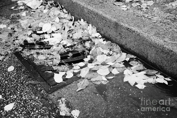 Storm Drain Photograph - fallen autumn leaves blocking storm water run off drain Vancouver BC Canada by Joe Fox