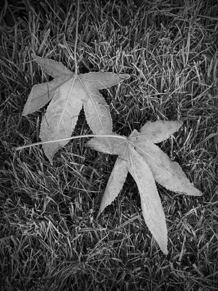 Photograph - Fallen Autumn Leaves In The Grass During Morning Frost by Randall Nyhof