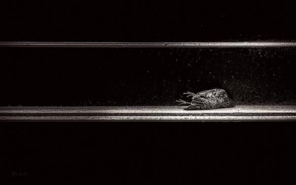 Photograph - Fallen by Bob Orsillo