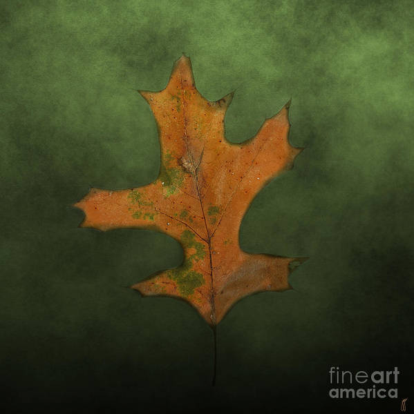 Photograph - Fallen Brown And Green Leaf by Jai Johnson
