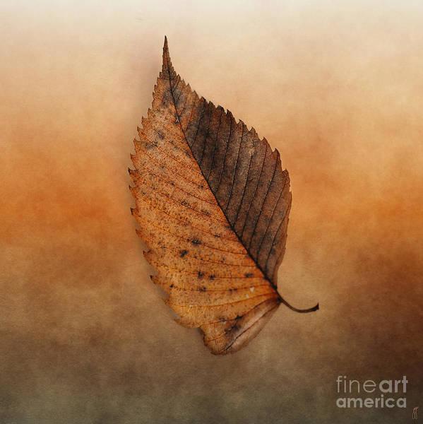 Photograph - Fallen Brown Leaf by Jai Johnson