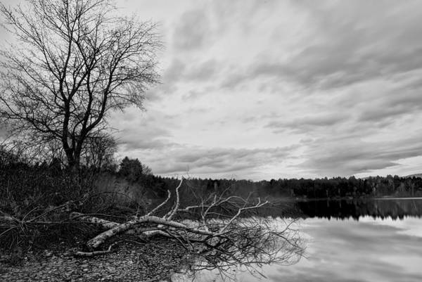 Photograph - Fallen Bw by Ivan Slosar