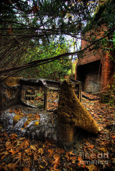 Abandonment Photograph - Fallen Colors by Amy Cicconi