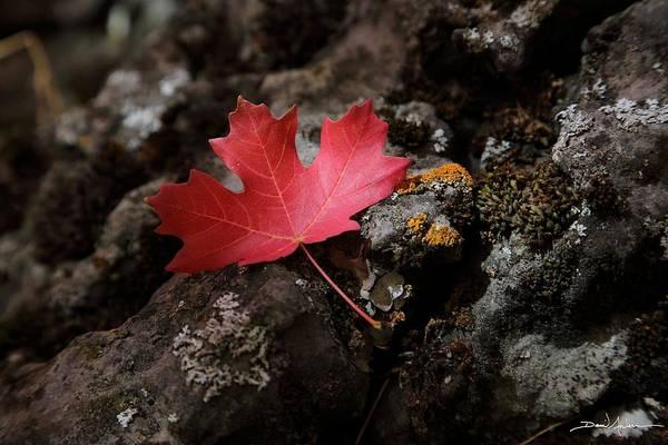 Photograph - Fallen by David Andersen