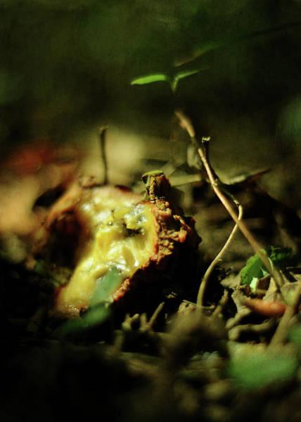 Photograph - Fallen Fruit by Rebecca Sherman