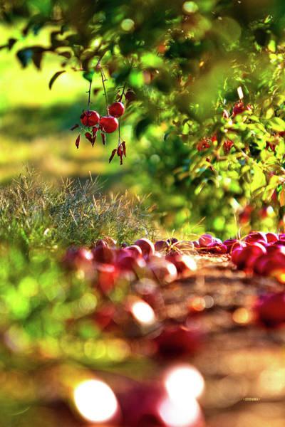 Photograph - Fallen Fruit by Steven Llorca
