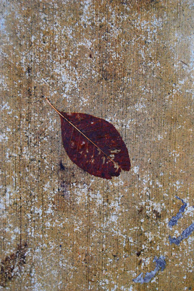 Photograph - Fallen by Jani Freimann