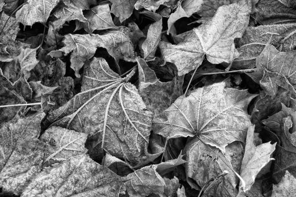 Photograph - Fallen by Jeff Sinon