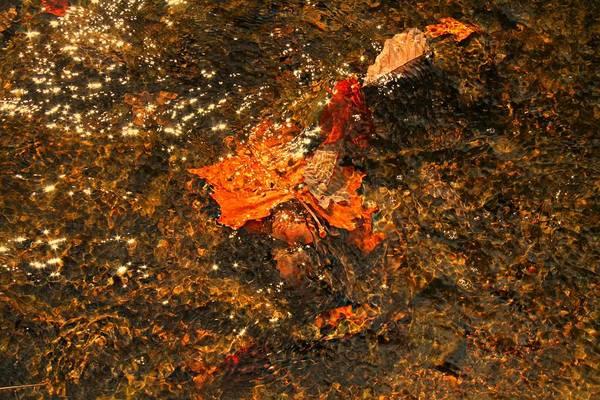 Photograph - Fallen Leaf Creek by Candice Trimble
