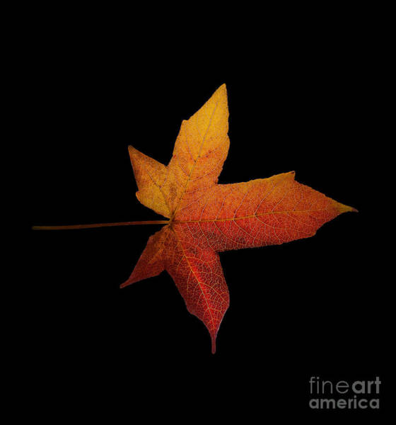 Photograph - Fallen Leaf by Eric Wiles