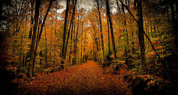 David Patterson Photograph - Fallen Leaves by David Patterson