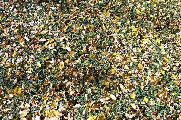 Photograph - Fallen Leaves by R B Harper
