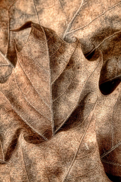 Dry Photograph - Fallen Leaves I by Tom Mc Nemar