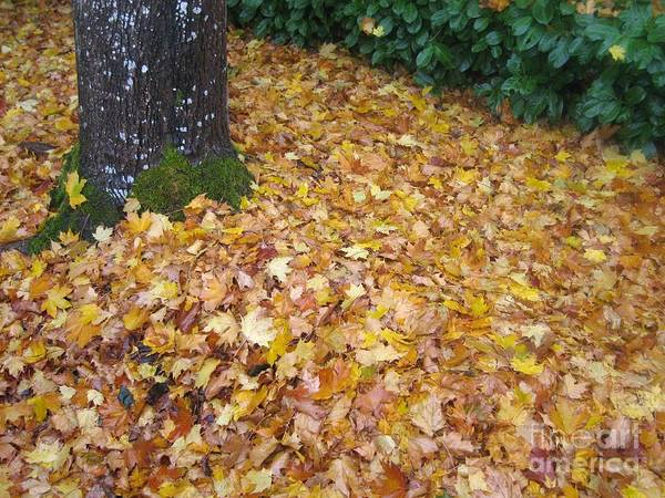 Photograph - Fallen Leaves by James B Toy