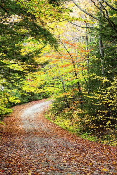 Robbie Photograph - Fallen Leaves Litter A Forest Road by Robbie George