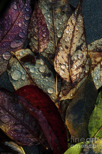 Driveway Photograph - Fallen Leaves by Mary Machare