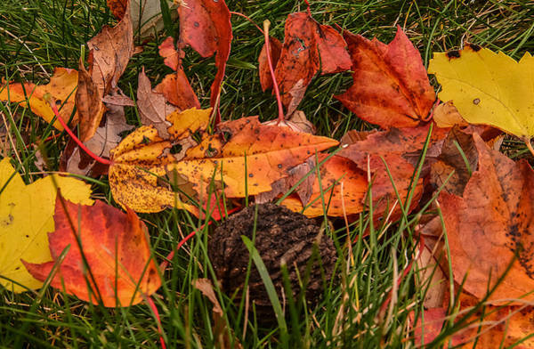 Photograph - Fallen Leaves by Robert Mitchell