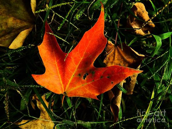 Photograph - Fallen Leaves by Robyn King