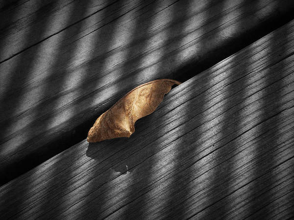 Photograph - Fallen Magnolia Leaf With Shadows On A Gray Wooden Deck by Randall Nyhof