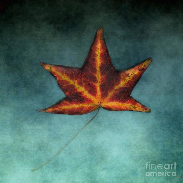 Photograph - Fallen Orange Leaf by Jai Johnson