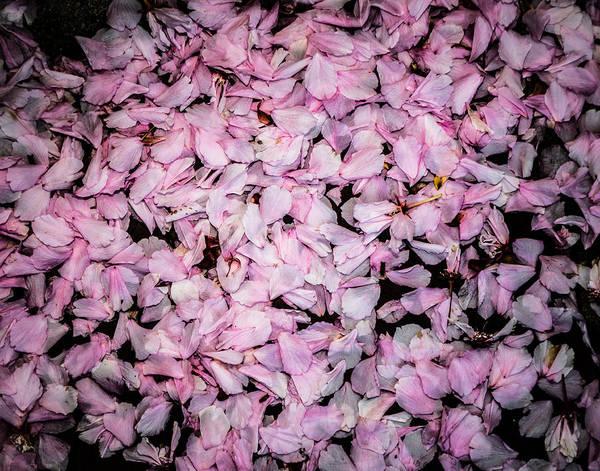 Photograph - Fallen Petals by Karen Saunders