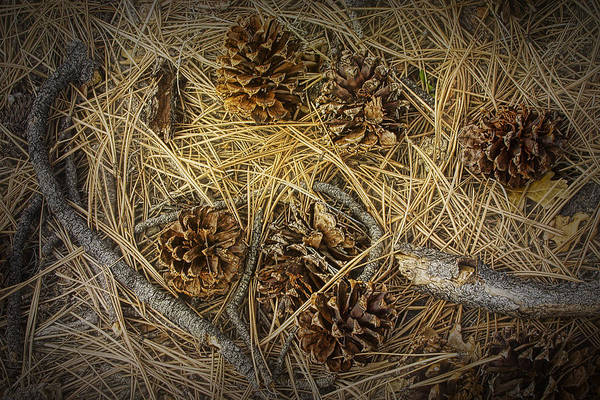 Photograph - Fallen Pine Cones No.465 by Randall Nyhof